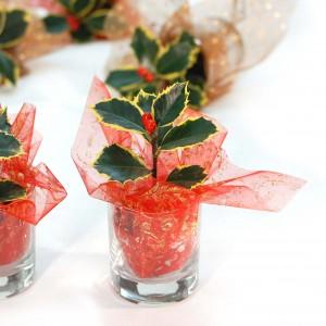 Mini ilex plant