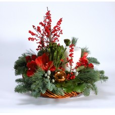Amaryllis and ilex in celebrative arrangement