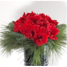 Amaryllis Red Bouquet