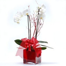 White orchids in glass planter