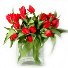 Fresh tulips arranged in a vase