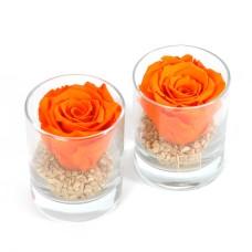 Orange Forever rose