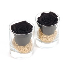 Black Forever Rose